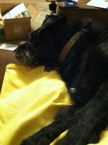 dog on apron